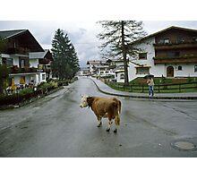 Lost cow, Austria, 1980s. Photographic Print