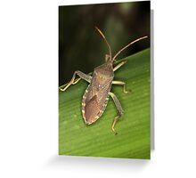 Decorative but Smelly Greeting Card