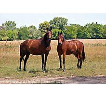 Two horses. Photographic Print