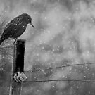 Alone in the Storm by by M LaCroix