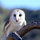 Barn Owl by loiteke