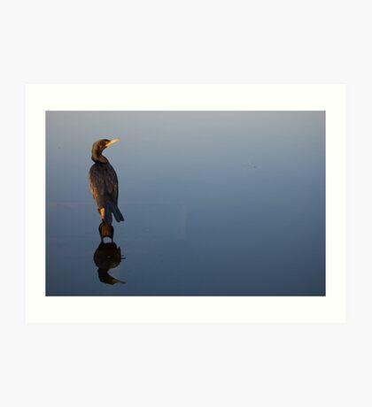 Biguá - Neotropic Cormorant Art Print