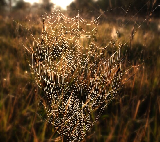 Misty morning web by Kate Fortune