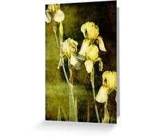 Spring is not far behind Greeting Card