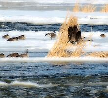 Late Winter Geese on the Fox by Thomas Young