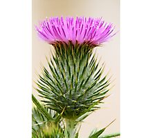 """""""Prickly Beauty"""" Photographic Print"""
