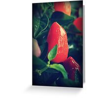 Chilli or Two Greeting Card