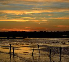 Sunrise @ the Wetlands by Robyn Forbes