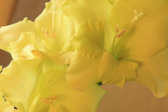 Yellow Glads by Carolyn Wright