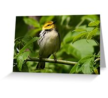 Black-throated green warbler Greeting Card