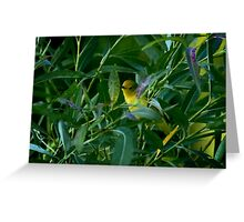 Warbler Greeting Card