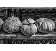 Autumn Pumpkins Photographic Print