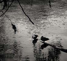 Two Birds by Christine Wilson