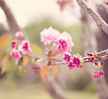 Cherry Blossom by SatelliteHeart