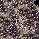 Pine Cones by suranyami