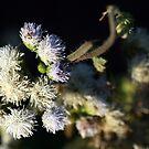 Lahu Mountain Flowers by randomness