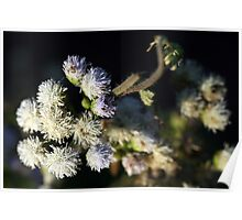 Lahu Mountain Flowers Poster