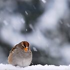 Snow Sparrow by Jean Poulton