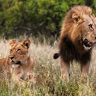 African Lion #2 by Kobus Olivier