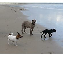 Dogs Day Out Photographic Print
