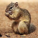Tree Squirrel #1 by Kobus Olivier