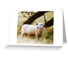 The Sheep Greeting Card