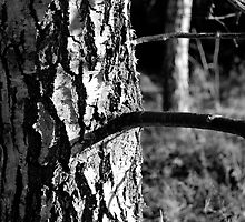Gnarly Tree Bark by dgscotland