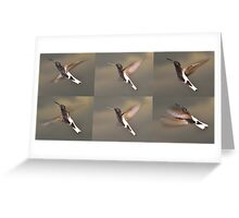Black Jacobin - anatomy of flight Greeting Card