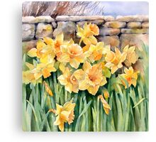 Cotswold Daffodils Canvas Print