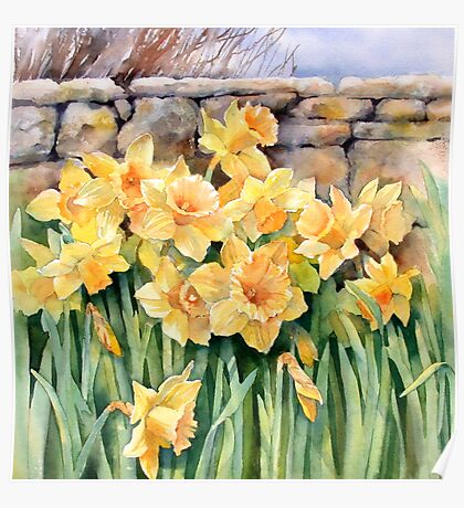 Cotswold Daffodils Poster