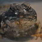 Uromastyx Lizard by ppcpetphotos