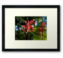Odd Flower Framed Print