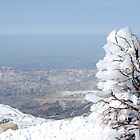 Israel, Hermon Mountain, tree covered with snow  by PhotoStock-Isra