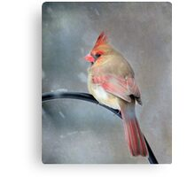 A Wee Bird ~ For Mike Oxley Canvas Print