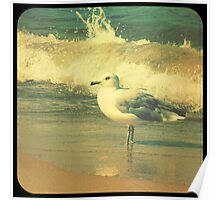 Lake Michigan Seagull Poster