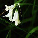 little flowers by bekkalily