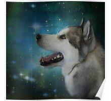Polar Star Gazer Poster