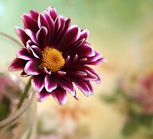 Little Gifts by Linda  Makiej Photography