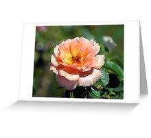 Apricot Hybrid Tea Rose With Honeybee Greeting Card