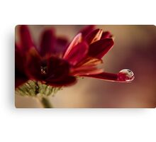 for you Canvas Print