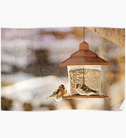 Winter Bird (2) Poster
