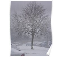 Tree covered in Snow Poster