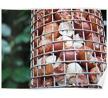 Bird Food Poster