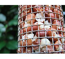 Bird Food Photographic Print