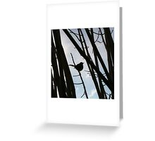 Thank you, Winter Bird Greeting Card