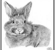 Bunny by Helen Lloyd