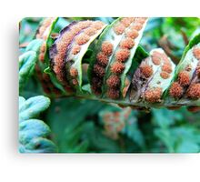 Plants upon Plant Canvas Print
