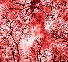 Red Wood by Dave Godden