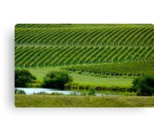 VIEW of the VINEYARD    ^ Canvas Print