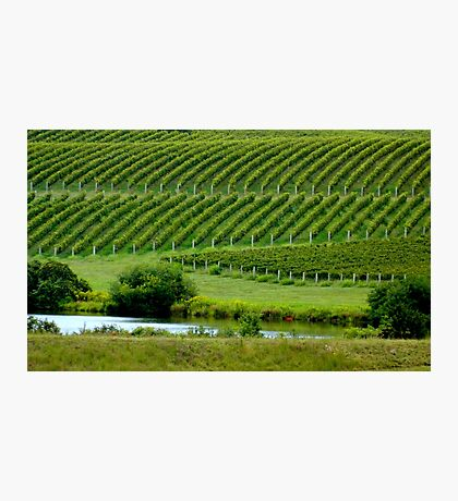 VIEW of the VINEYARD    ^ Photographic Print